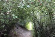 مسیر روستای هرانده به غار بورنیک