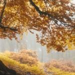 طبیعت پاییزی جنگل الیمستان