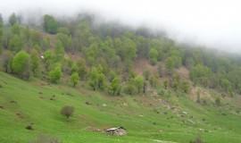 دشت کوه روبار ، کوهروبار