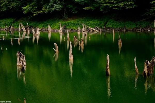 کنده های سر برآورده از آب دریاچه چورت