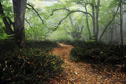 پیاده راه پاییزی جنگل الیمستان
