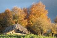 نمای پاییزی کلبه ی کوه روبار