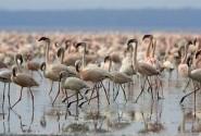 پرندگان مهاجر تالاب میانکاله