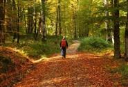 پیاده روی در مسیر جنگل راش