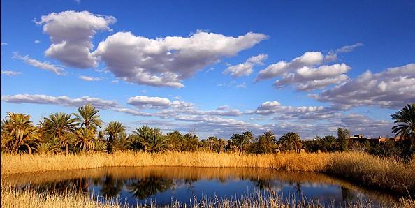 نخل های کویر مصر