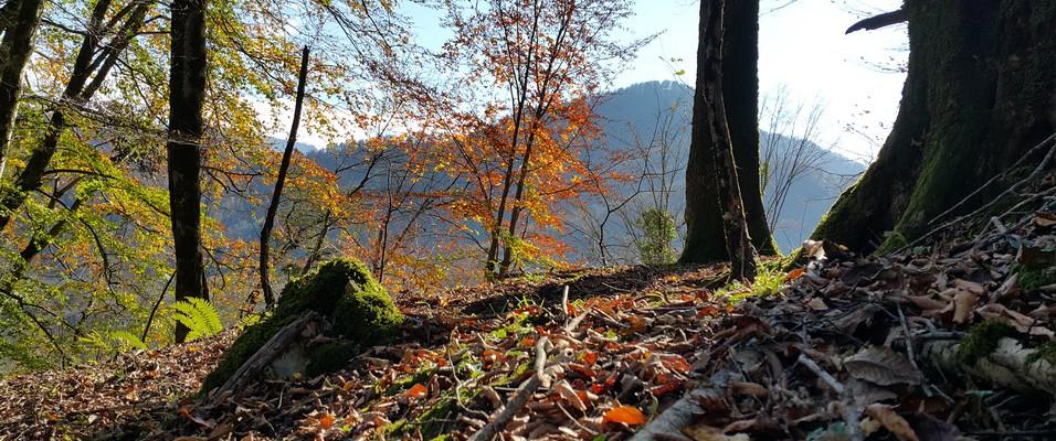 هزار و یک رنگ پاییز در مسیر گیشار کوه