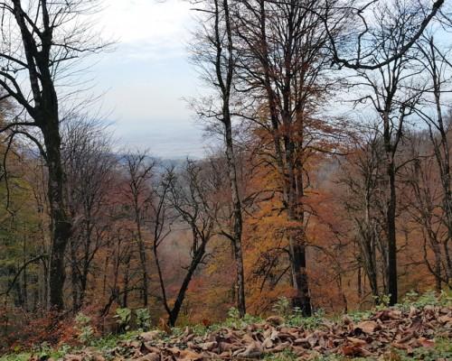 درختان پاییزی و نمایی کم نظیر از دریای خزر