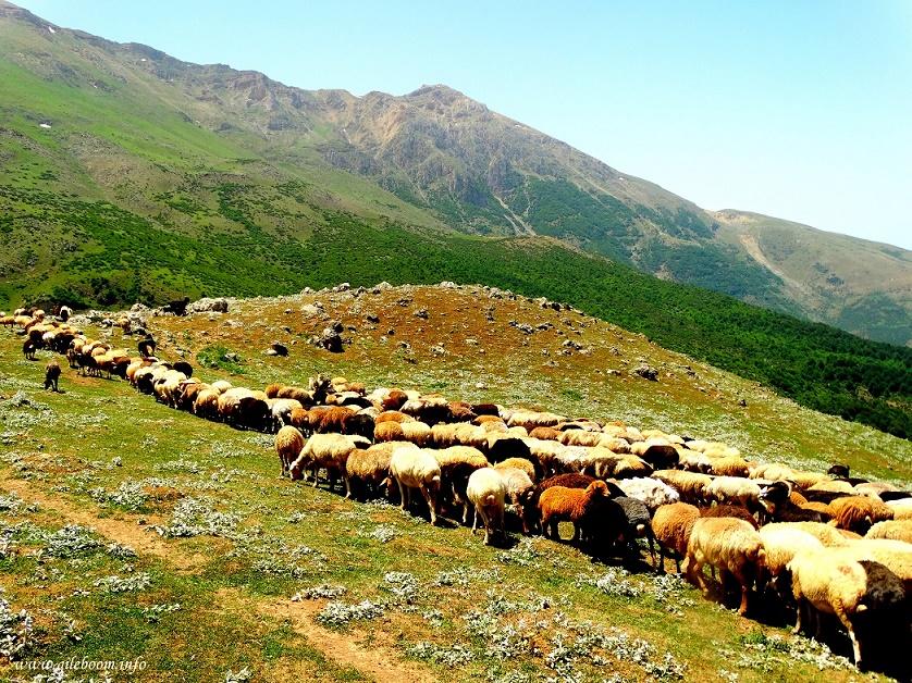 نتیجه تصویری برای گردشگری روستائی
