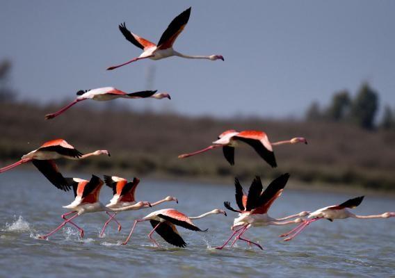 پرندگان مهاجر میانکاله