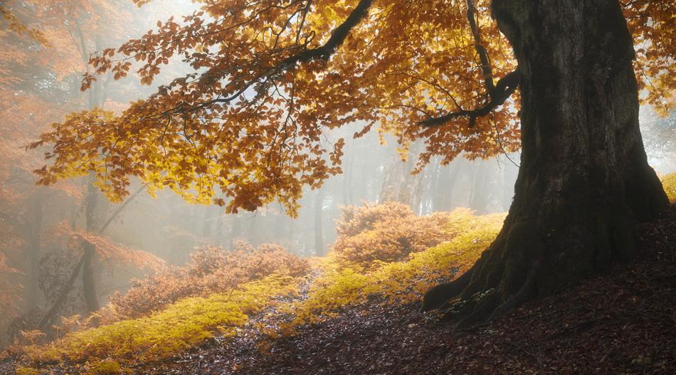 تورهای پاییزی